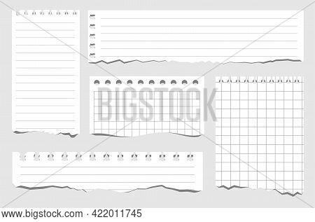 Set Of Pieces Of Paper Of Different Types. Torn Notebook Papers. Blank Gridded Notebook Ripped Out P