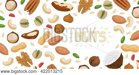 Nuts Set Horizontal Banner With Different Types Of Nuts Brazil Nut, Coconut, Cashew, Hazelnut, Pista