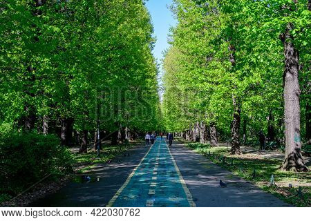 Bucharest, Romania - 5 May 2021: Landscape With The Main Alley And Many Large Green Trees In King Mi