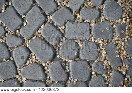 Stone-paved Path Close-up In The Evening With Tree Seeds