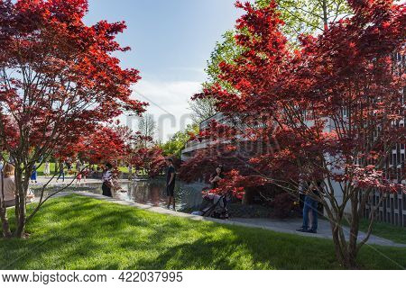 Krasnodar, Russia-may 02, 2021: Beautiful Red-leaved Maples Near An Artificial Pond. People Walk In