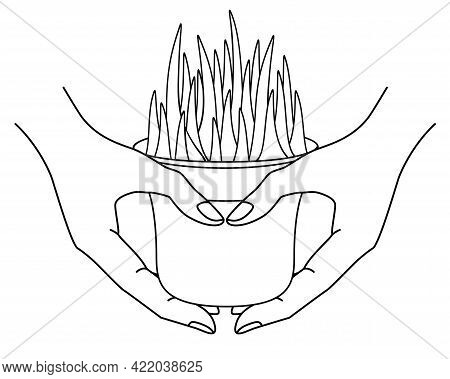 Hands Holding A Pot With A Plant - Vector Linear Illustration For Coloring. Outline. A Pot With Herb