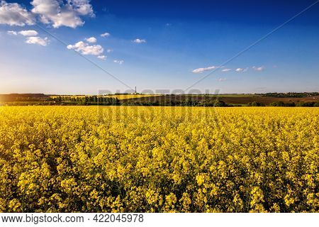 Rapeseed, Canola Or Colza Field In Latin Brassica Napus With Beautiful Clouds On Sky, Rape Seed Is P