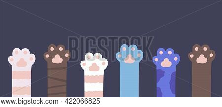 Cat Paws. Kitty Fur Legs. Funny Domestic Pets Foot