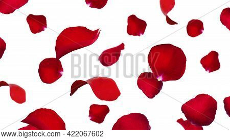 Red Rose Petals Isolated On A White Background. Flying Petals