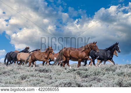 Colorado Wild Mustang Horses At Sandwash Basin