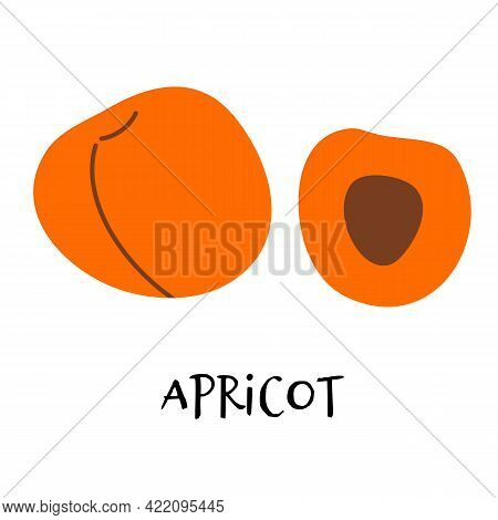 Vector Illustration Of Ripe Apricot In Hand Drawn Flat Style.