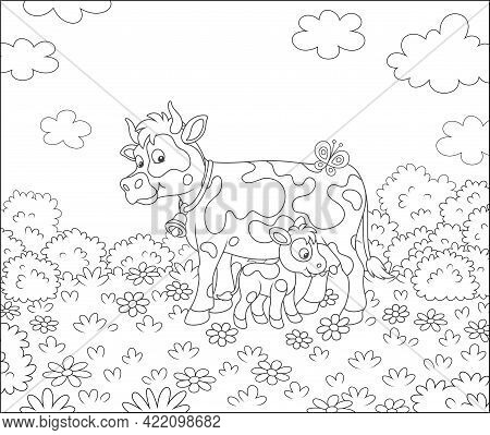 Happy Spotted Cow And A Cute Little Calf Drinking Milk On Grass Of A Summer Field With Flowers On A