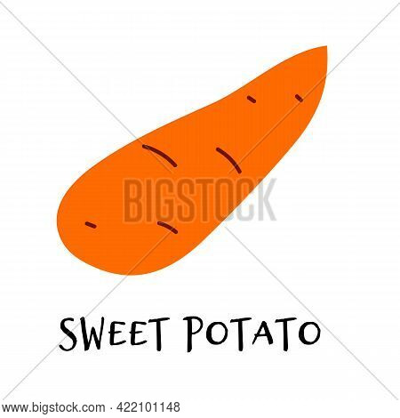 Vector Illustration Of Sweet Potato In Hand Drawn Flat Style. Doodle Fresh Healthy Veggie