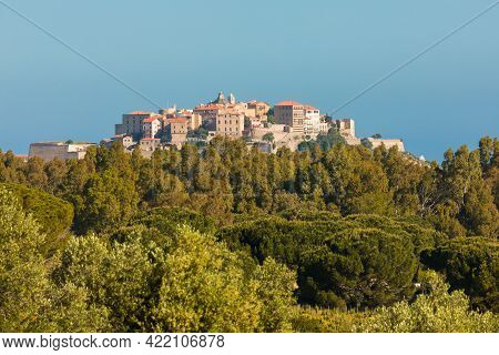 Early Morning Sun On The Citadel Of Calvi In The Balagne Region Of Corsica With Pine Trees In The Fo