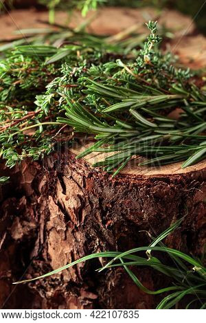 Fragrant Uncultivated Herbs On A Stump In The Forest. Fresh Thyme And Rosemary.