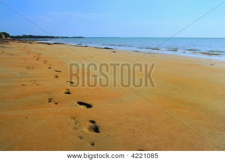 Footprints And Pawprints On The Beach