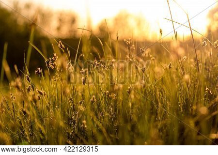 Grass In A Wild Field Illuminated By The Sun. Picturesque Natural Background. Nature At Sunset