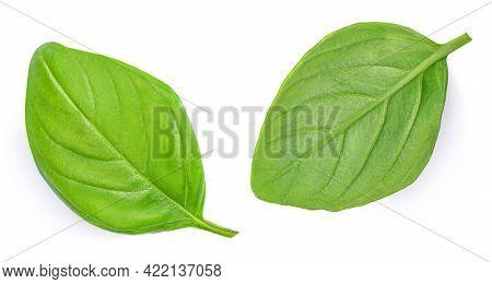 Basil Isolated. Basil Leaf On White. Basil Herb Leaves Isolated.