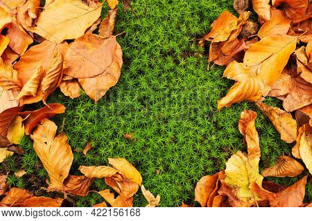 Autumn Fall Leaves On Green Moss Blurred Background. Freh Natural Scenery. Orange Fallen Leaf In For