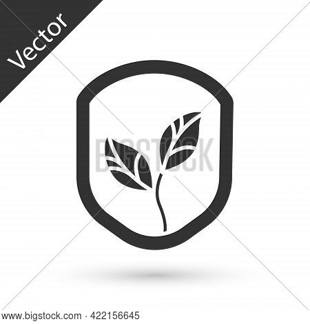 Grey Shield With Leaf Icon Isolated On White Background. Eco-friendly Security Shield With Leaf. Vec