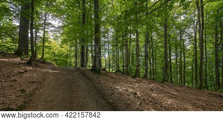 Country Road Through Beech Forest. Nature Scenery In Summer. Dappled Lite Through Foliage On The Gro