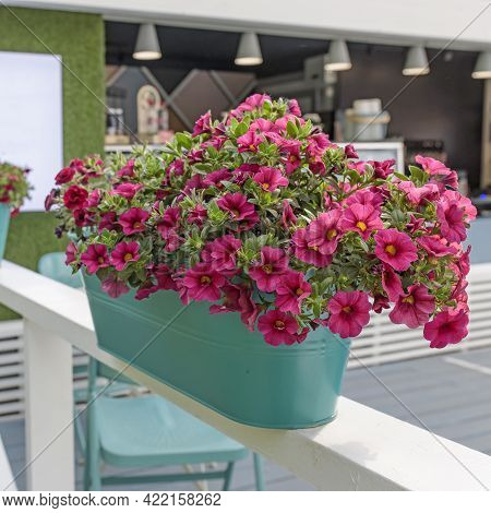 Red Petunia In Green Pots Decorates The Veranda Of The House. Garden Decoration. Square Frame
