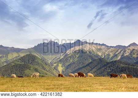 Flock Of Sheep In A Qazaqstan Mountain Jailau With Copy Space