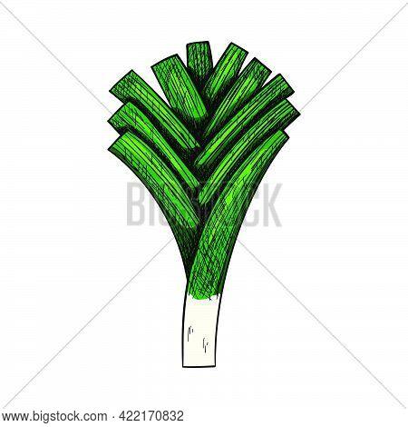Leek Onion Icon. Hand Drawn Sketch Design. Vector Illustration.