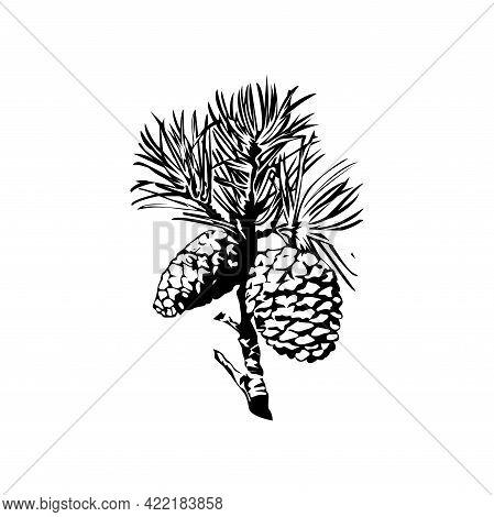Illustration Vector Graphic Of Pine Cone