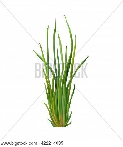 Realistic Green Chives On White Background Vector Illustration
