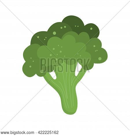 Stem Green Broccoli Is Isolated. Keto-friendly Diet. Vector Illustration Of Food In A Flat Style. Br