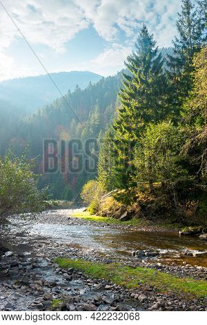 Countryside Landscape With Mountain River. Nature Scenery With Spruce Trees On The Hills On A Sunny