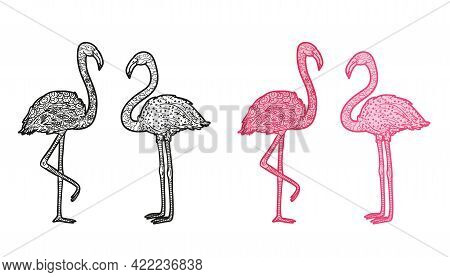 Flamingos. Hand Drawn Line Birds. Freehand Art. Different Color Options