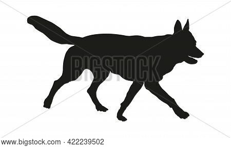 Running Czechoslovak Wolfdog Puppy. Black Dog Silhouette. Pet Animals. Isolated On A White Backgroun