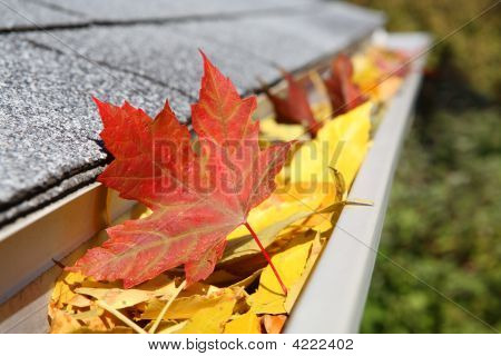 A close up of a rain gutter filled with fall leaves poster