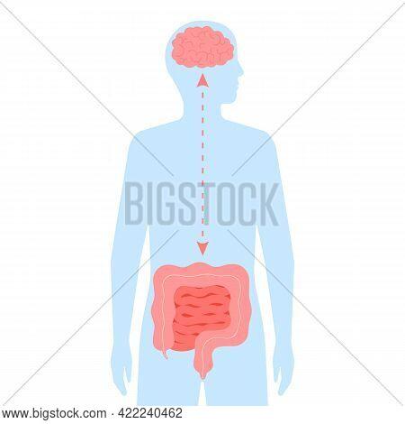 Relation Health Of Brain And Intestine Gut. Connection Healthy Of Human Brain And Gut, Second Brain.