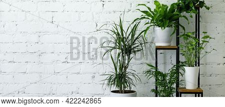Mix Of Potted Indoor Plants On Stand By White Brick Wall. Air Purifying Houseplants. Banner Copy Spa