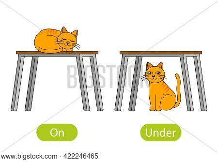 The Cat Sleeps On The Table And Sits Under The Table. The Concept Of Children's Learning Of Opposite