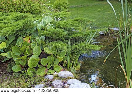 Bergenia Crassifolia, Juniper Bushes, Trimmed Boxwood Bushes, Sedges And Reeds, Large Rocks By An Ar