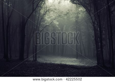 Light coming trough the canopy in a dark forest with fog