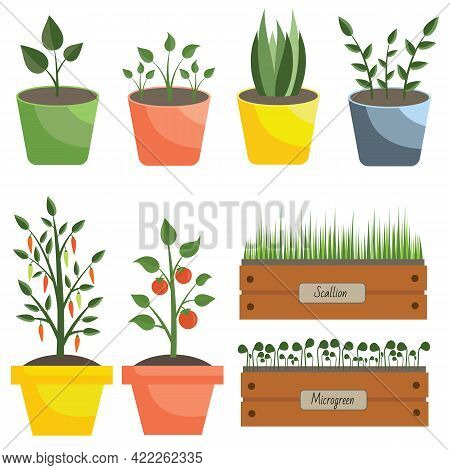 Collection Of Different Plants, Flowerpots, Greenery. A Set Of Plants In Pots For Gardening, Balcony