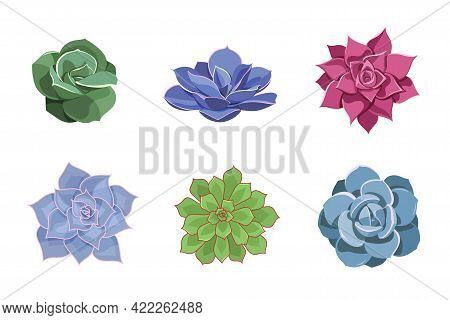Set Of Color Succulents Of Echeveria. Desert Flowers In Cartoon Style For Print And Design. Floral C