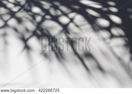 Shadows Of Palm Tree Leaves On White Wall Or Table. Dark Silhouette Of Tropic Plant In Bright Sunlig