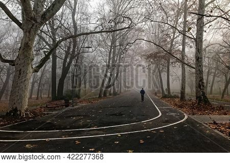 Walking Through The City Park On A Foggy December Morning In Szeged, Hungary.