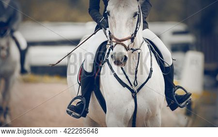 Equestrian Sport. Portrait Sports White Stallion In The Bridle. The Leg Of The Rider In The Stirrup,