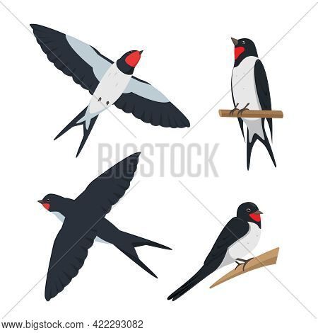 Set Of Swallows In Different Poses. Flying And Sitting Swallow Birds. Cartoon Icons Vector Illustrat