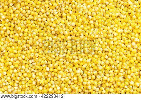 Food Background - Uncooked Polished Proso Millet Grains