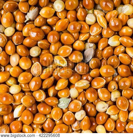Square Food Background - Unhulled Proso Millet Grains Close Up