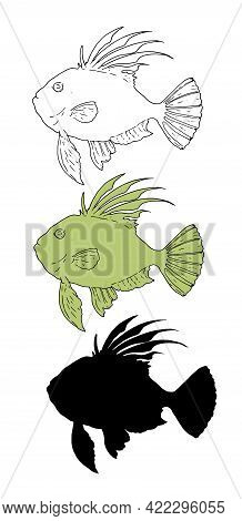 A Set Of Isolated Vector Elements Of The Common Sunfish From A Black Outline And Silhouette And A Sw
