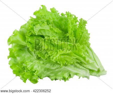 Fresh Bunch Of Lettuce Leaves Isolated On White Background. Vegetables Ingredients For Cooking.