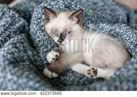 Kitten on gray knitted blanket. Small cat at home Pet relax