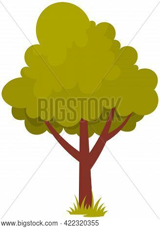 Alone Deciduous Tree With Trunk And Dense Foliage. High Plant With Widely Spread Branches And Green
