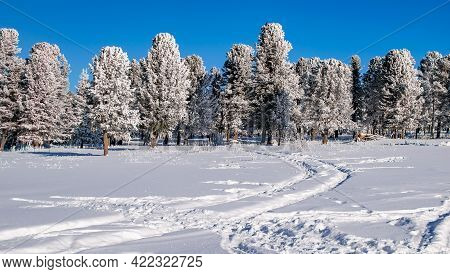 Landscape, Two Tracks From Car Tires On Pure White Snow, Leading To Coniferous Trees In The Forest I