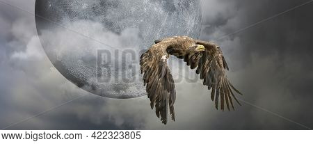 European Sea Eagle Flying In An Impressive Blue Sky With Veil Clouds And The Moon. Bird Of Prey In F